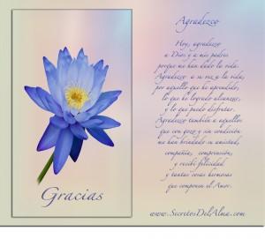 Descubra el Secreto de como el Agradecimiento influye en nuestras vidas