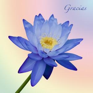 Como el agradecimiento influye en nuestras vidas.